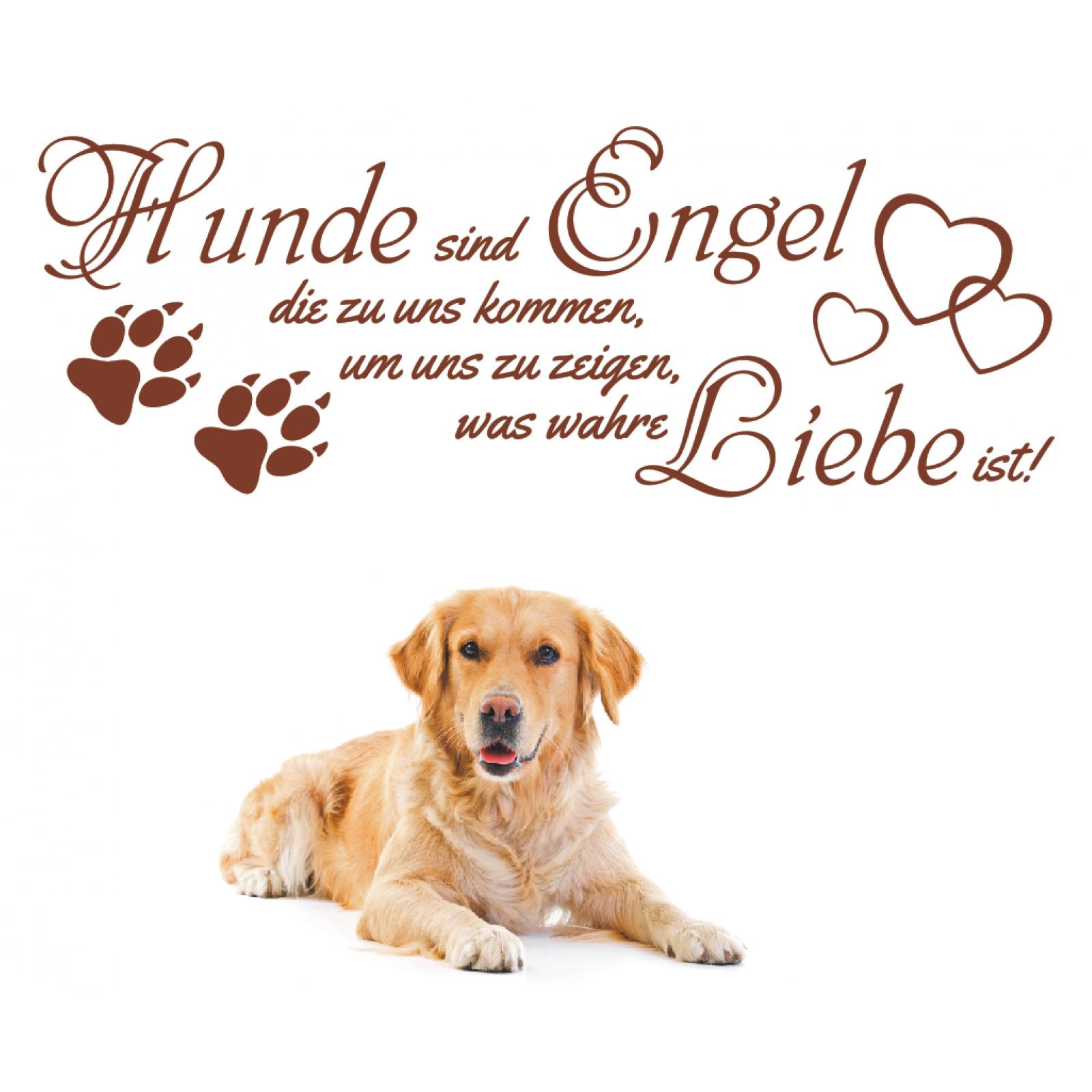 Spruch Hunde